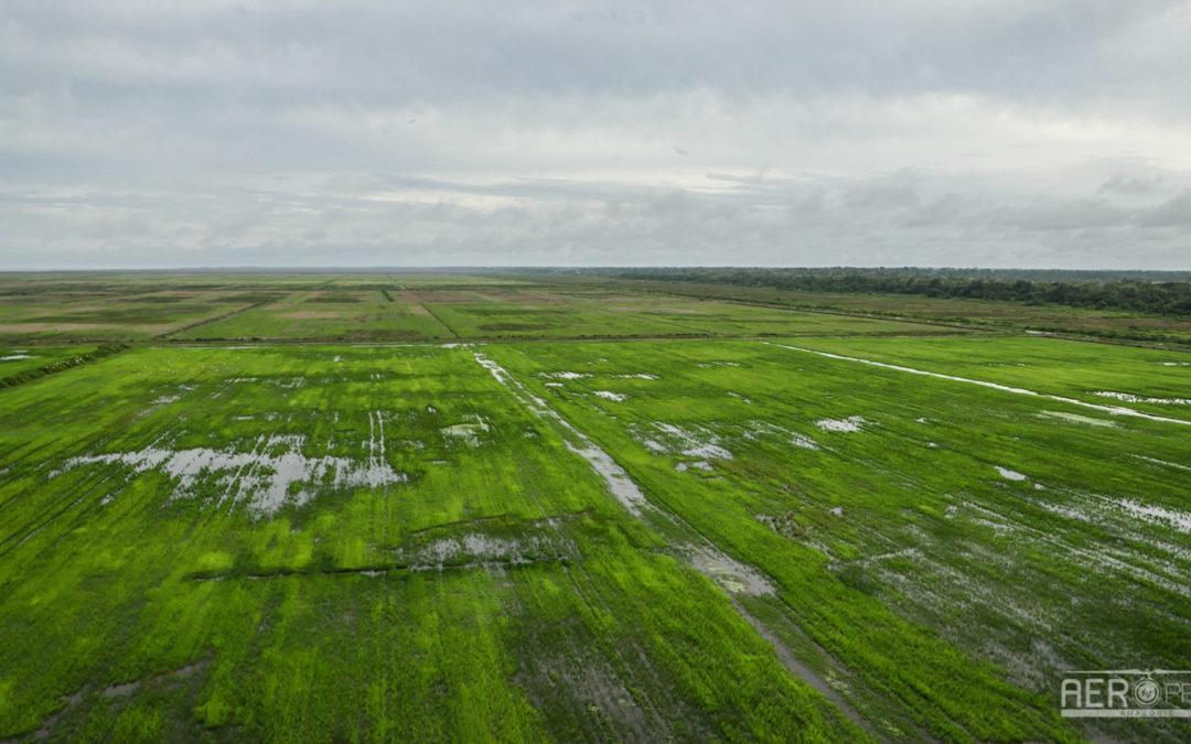 📷 – Mission photographies des rizières de Mana